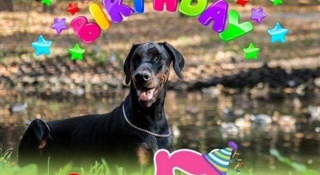 "Happy  Birthday  our  wonderful  ""N"" litter!"